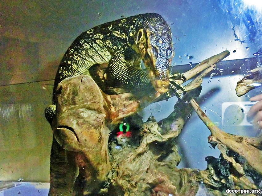 大阪市大正区 爬虫類きっちゃ アゲイン